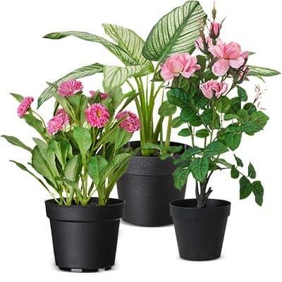 Цветы для уличных вазонов