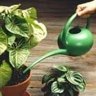 Уход за растениями в зимний период времени