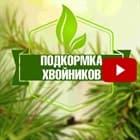 Подкормка хвойников в саду ✅ Удобрение Pokon для хвойных растений