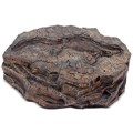 Камень с ихтиозавром
