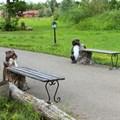 Лавка для парка