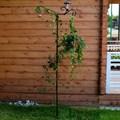 Для вьющихся растений шпалера - фото 15572