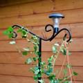 Для вьющихся растений шпалера - фото 15573