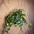 Настенная подставка под цветок - фото 17233