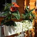 Балконные кашпо - фото 17326