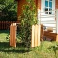 Кованый секционный заборчик с деревом (3 штакетины) - фото 17332