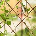 Арка садовая - фото 17401