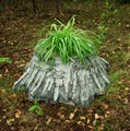 Садовое кашпо пень березовый