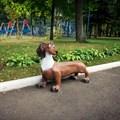 Парковая скамейка собака