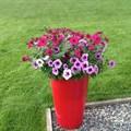 Большое кашпо для цветов