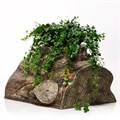 Кашпо для цветов массив дерева