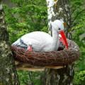 Гнездо аиста фото