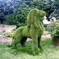 Топиарная фигура лева на камне для дачи и загородного дома