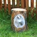 Пень с совой садовое кашпо - фото 24977