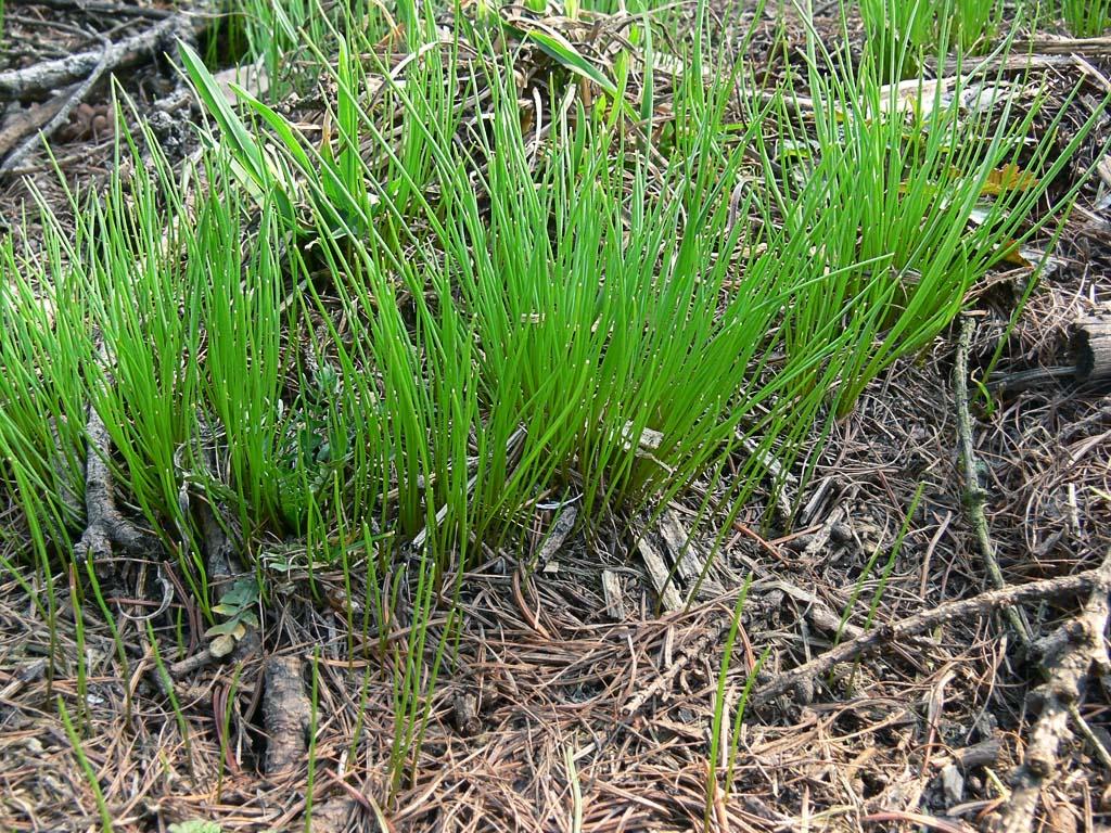 Травы весной картинки