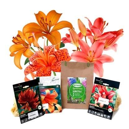 Комплекты луковичных цветов