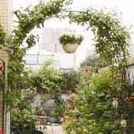 "<h4 class=""title_news_article"">Арки для винограда в Хитсад</h4>"