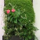 Вертикальное озеленение в доме или квартире