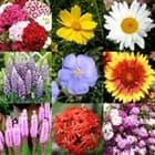 Какие многолетние цветы можно посадить осенью семенами?