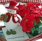 Пуансеттия - яркий и красивый символ рождества