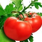 Семена томатов - лучшие сорта.