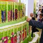 Саженцы роз - популярные сорта, хранение