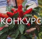 КОНКУРС - прими участие!