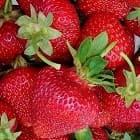 Как выращивать ягоды семенами?
