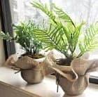 Что происходит с комнатными растениями осенью?