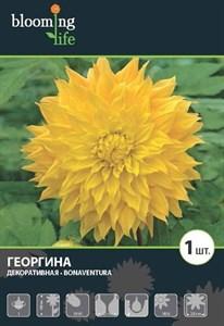 Георгина Декоративная Бонавентура (1шт)