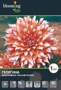 Георгина Декоративная Холланд Фестивал (1шт)