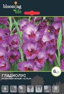 Гладиолус Крупноцветковый Алфалфа (7шт)