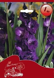 Гладиолус Крупноцветковый Блю Берд (7шт)