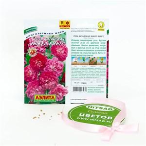 Семена цветов роза энжел вингс аэлита