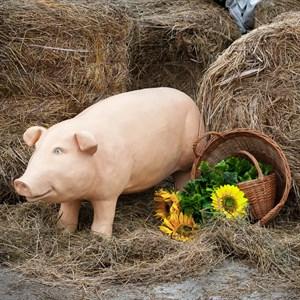 Свинка U08358