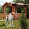 Собака друг человека U07671