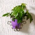 Подставка для цветка настенная