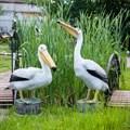 Пеликаны фигуры птиц