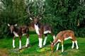 Фигуры оленей для парка