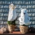 Колпаки для укрытия растений