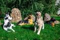 Фигуры собак для сада