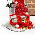Собака Шарпей - фото 40454