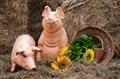 Свинки U08337