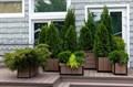 Садовые кадки для растений