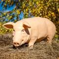 Садовая фигура Свинка - фото 50049