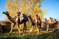 Верблюд ростовая фигура - фото 50555