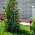 Шпалера Тюльпаны - фото 56418