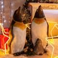 Фигура Пингвин - фото 59760