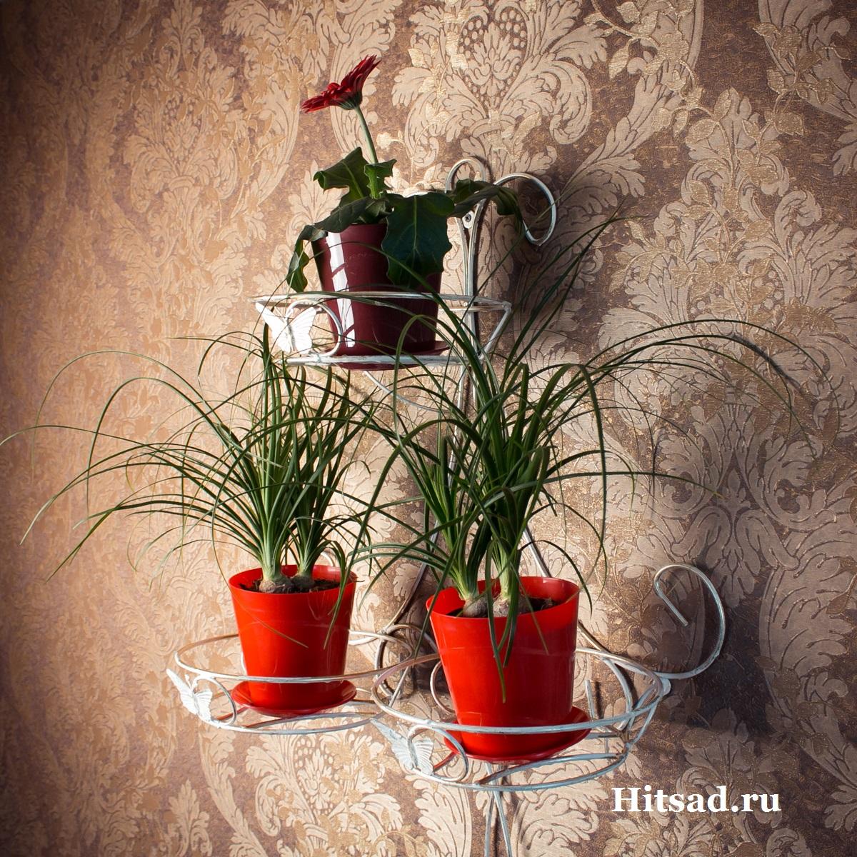 Настенный держатель для цветов доставка живые цветы оптом москва домодедово